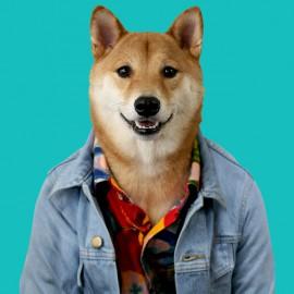 tee shirt menswear dog light blue