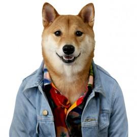 tee shirt menswear dog white