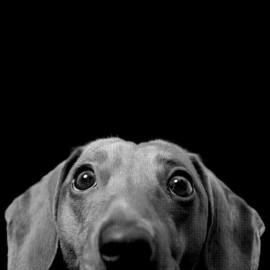 tee shirt design dog  funny noir