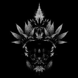 tee shirt cannabis skull noir