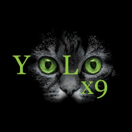 teeshirt yolo chat noir